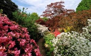 2 kompozycja  w ogrodz