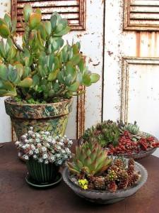 2 kwiaty w donicach i talerzach